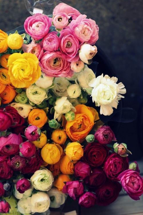 Ranunculus, such a beautiful combination of colors!   Scalingbackblog