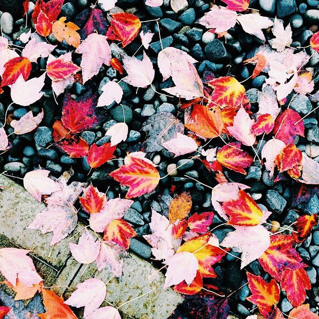 Fall.... #leaves #vscocam