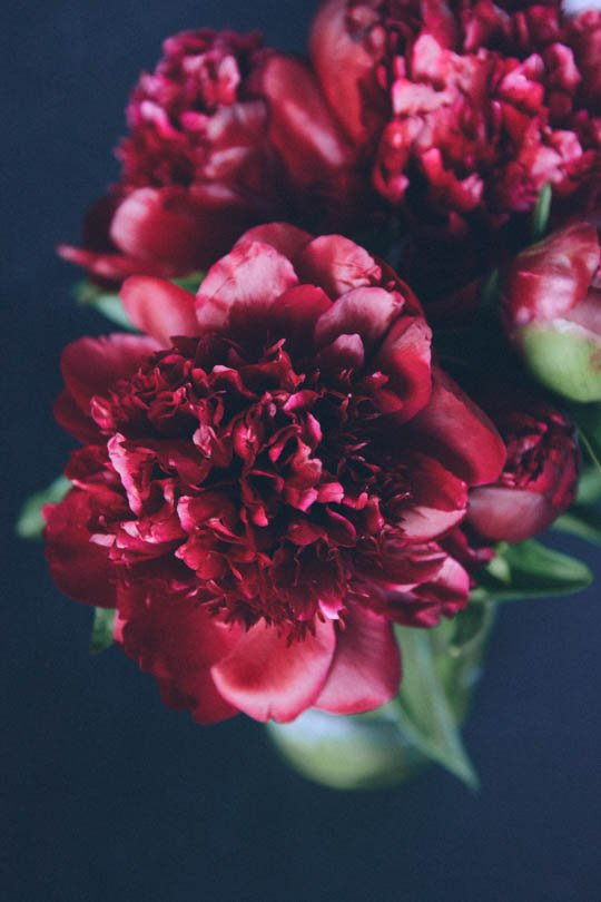 peonies | scaling back